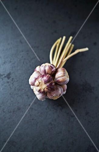 A bundle of fresh garlic bulbs