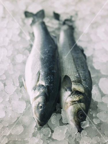 Two fresh sea bass on ice