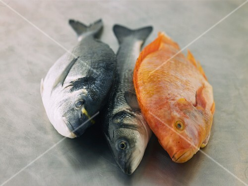 Gilt head seabream, sea bass and tilapia