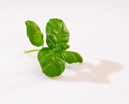 A sprig of basil on a white surface