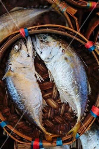 Fresh mackerel in a bamboo basket (Thailand)
