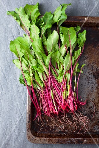 Young beetroot leaves
