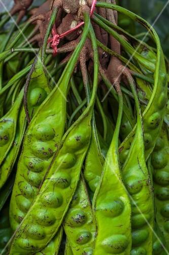 Petai beans on a bush (Thailand)