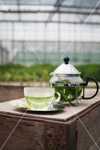 Herb tea in a teapot and a cup on a wooden box in a greenhouse