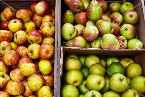 Fresh apples and pears on a market stand