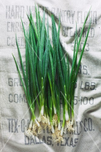 Spring onions on a light linen surface