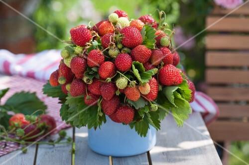 Bouquet of strawberries in pot