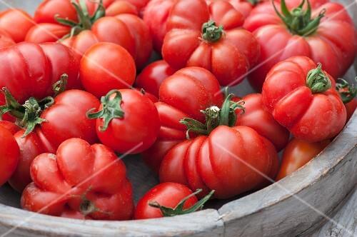 Ficarazzi tomatoes