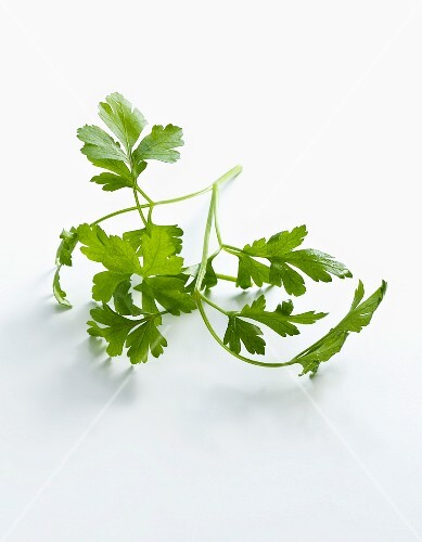 Flat leaf parsley on a white surface