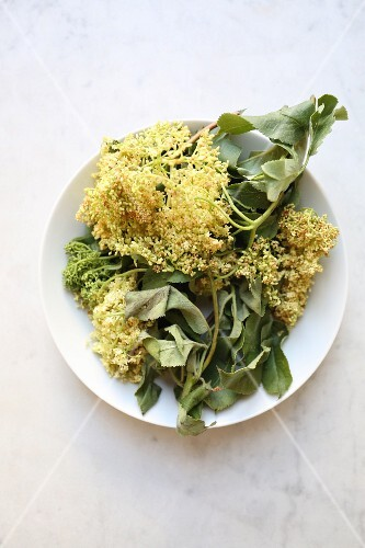 A sprig of wilted elderflowers and leaves on a plate (seen from above)