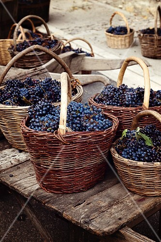 Freshly harvested red grapes in wicker baskets
