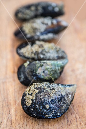 Mussels in a row on a wooden surface