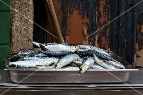 Fresh sardines in a stainless steel container