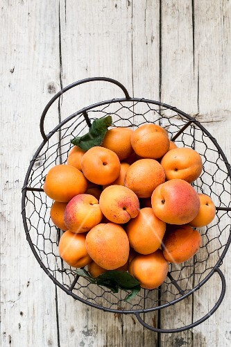 Fresh apricots in a wire basket