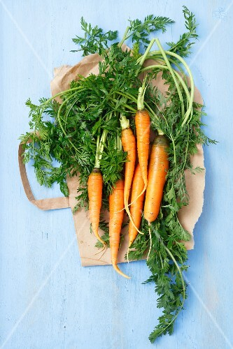 Young carrots on a piece of paper