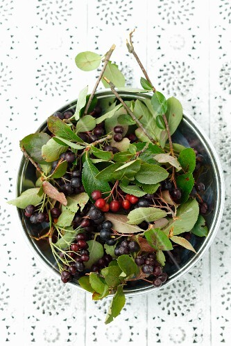 A bowl of aronia berries with leaves