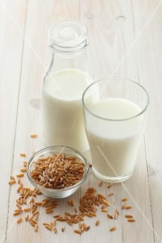 Kamut milk and kamut