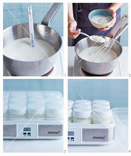 Yoghurt being made