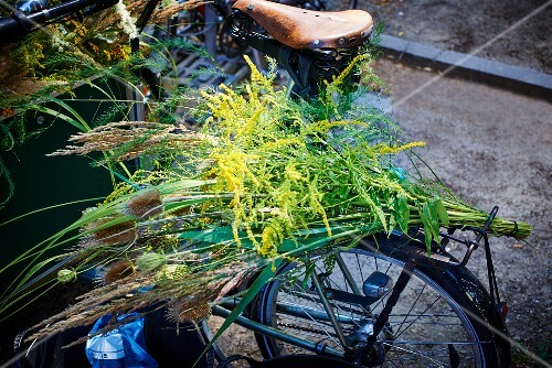 Bunch of grasses on bicycle luggage rack