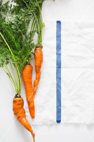 Fresh carrots on a white tablecloth (seen from above)