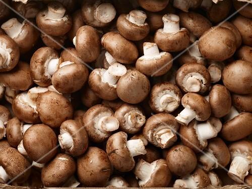 Brown mushrooms (full frame)