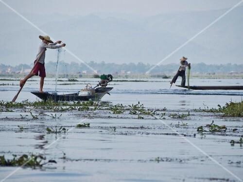 Fishermen casting their nets in Inle Lake, Shan State, Myanmar (Burma), Asia