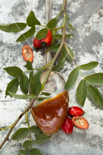 Homemade rose hip jelly on a vintage spoon with fresh rose hips on a sprig