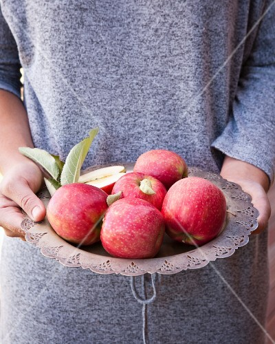 Hands holding a metal plate containing red apples