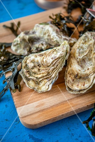 Fresh oysters with seaweed on a chopping board