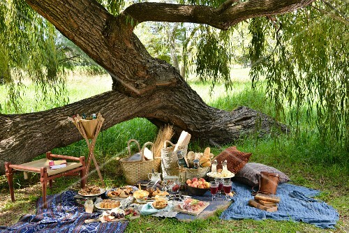 A winter picnic under a tree in South Africa