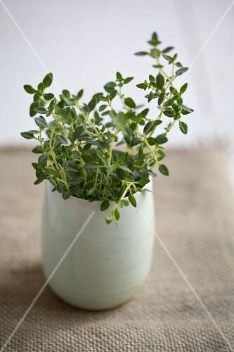 Fresh thyme in a vase