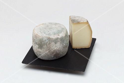 Cheese, Culinary specialties of Corsica Domaine Mavela, Aléria, Corsica Island, France, Europe