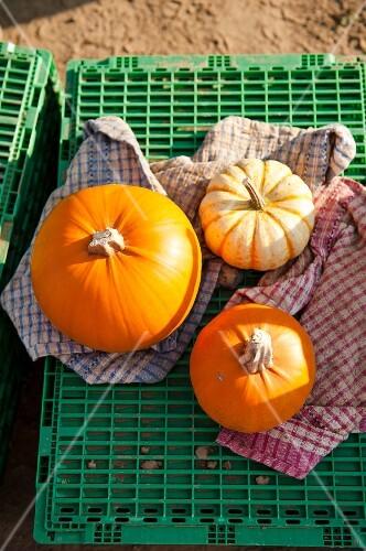 Various pumpkins on a crate