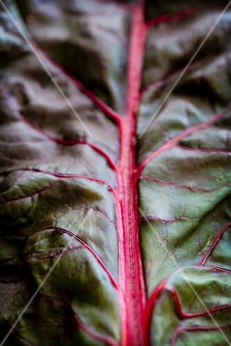 Red-stemmed chard leaf (leaf-vein)