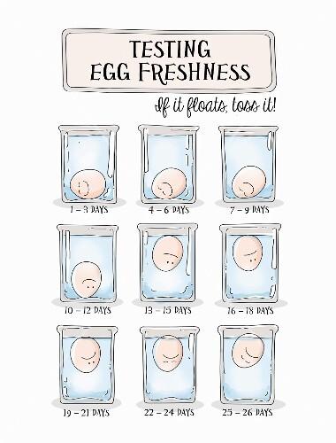 An illustration of an egg freshness test