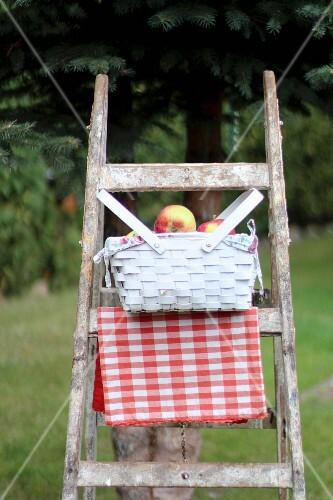 Basket of apples on wooden ladder in garden