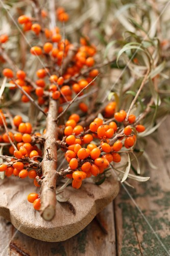 A sprig of sea buckthorn berries on a wooden surface