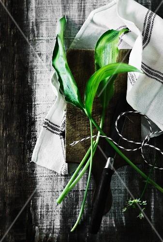 An arrangement of wild garlic leaves