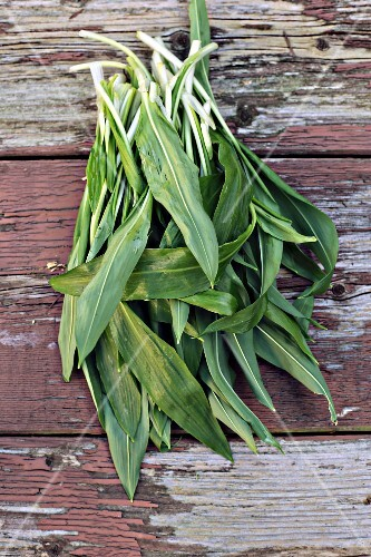 Freshly harvested wild garlic on an old weathered wooden table