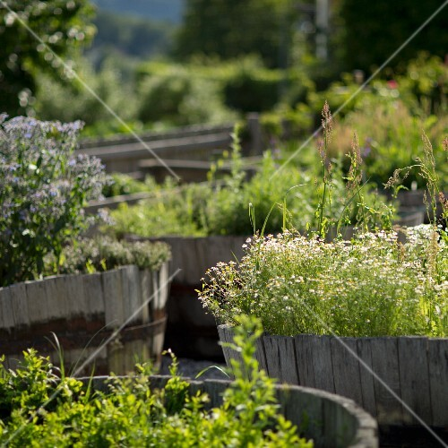A herb garden at the restaurant Saziani Stub'n, Styria, Austria