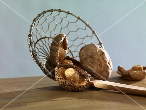 Dried shiitake mushrooms on a draining spoon