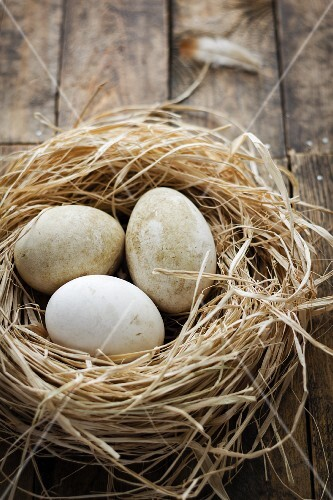 Fresh goose eggs in a nest