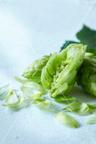 Hop cones with leaves (close-up)