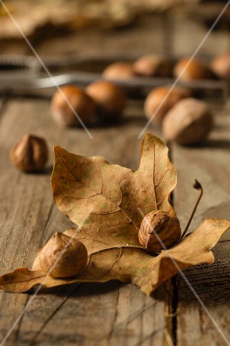An autumnal arrangement with hazelnuts