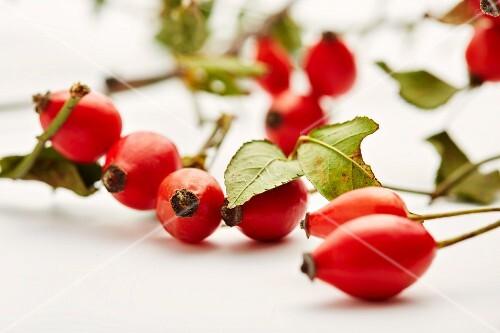Rosehips (Rosa canina)