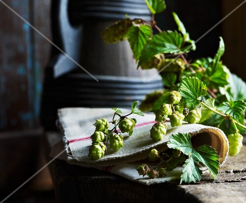 Hops flowers on a rustic wooden table