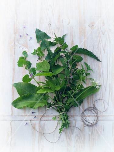A bouquet of fresh wild plants