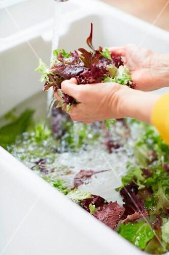 A woman washing lettuce in a sink