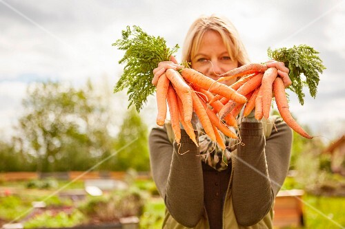A woman in a garden holding bunches of freshly harvested carrots