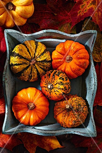 Various pumpkins on a wooden tray (seen from above)